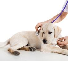 Welpe beim Tierarzt: Impfung