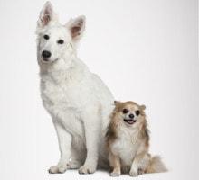 Hundefutter je nach Rasse