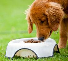 Therapiefutter für Hunde