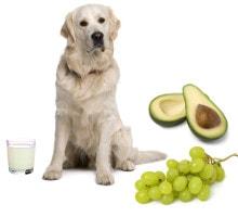 Verbotene Lebensmittel für Hunde