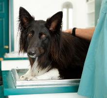Vorbeugung von Hundekrankheiten