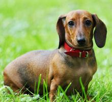 Futter für wenig aktive Hunde