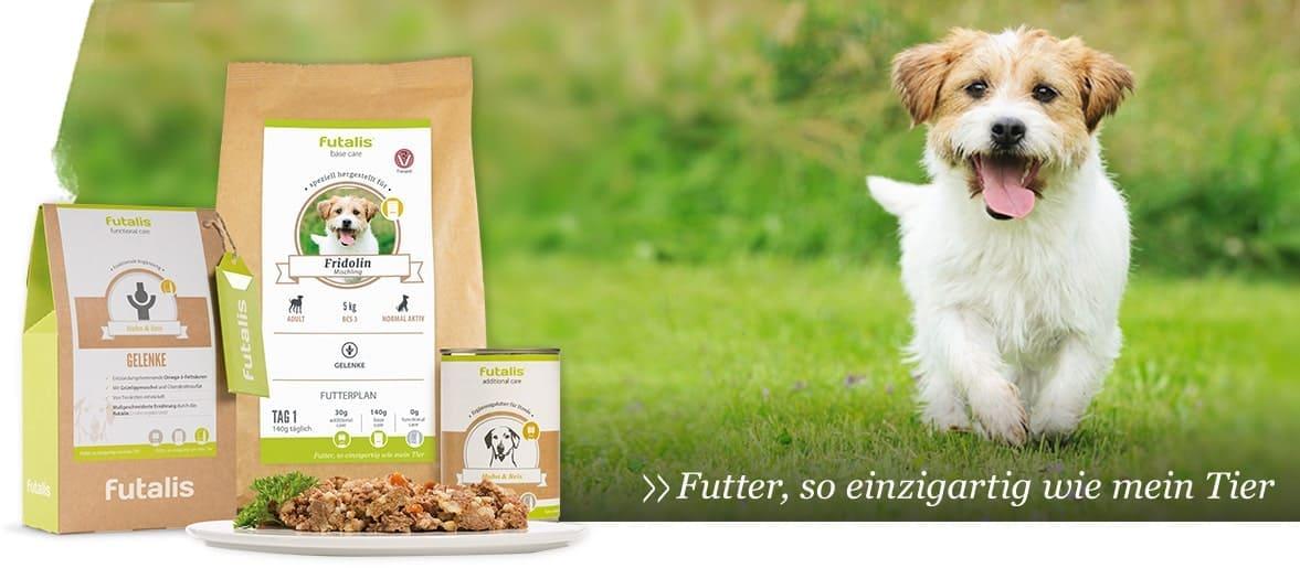 Was dürfen Hunde nicht essen?