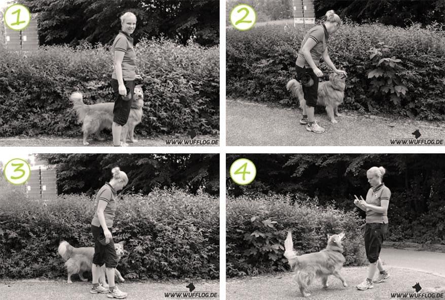 Hundetrick Rückwärts laufen