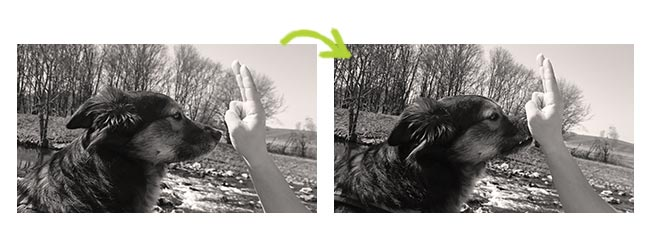 Annas Hundetrick