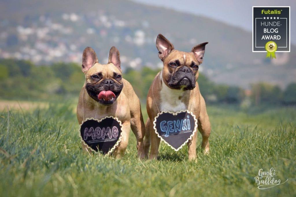 Blog des Monats GenkiBulldog