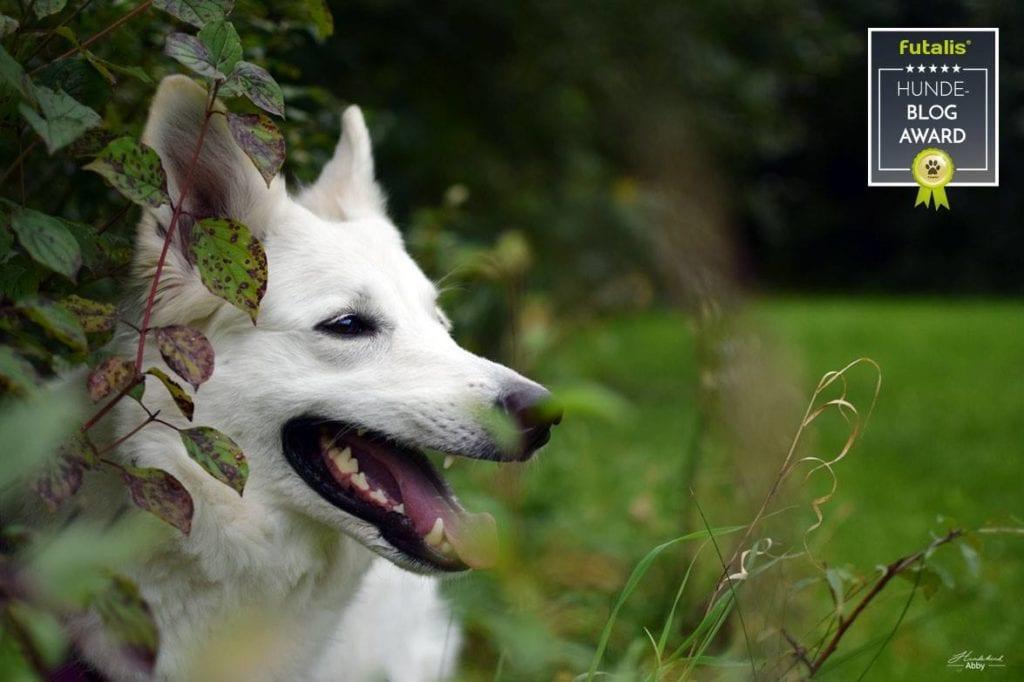 Hundekind Abby Blog