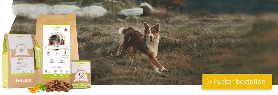 Hund rennt über die Wiese: Achtung Lungenwürmer