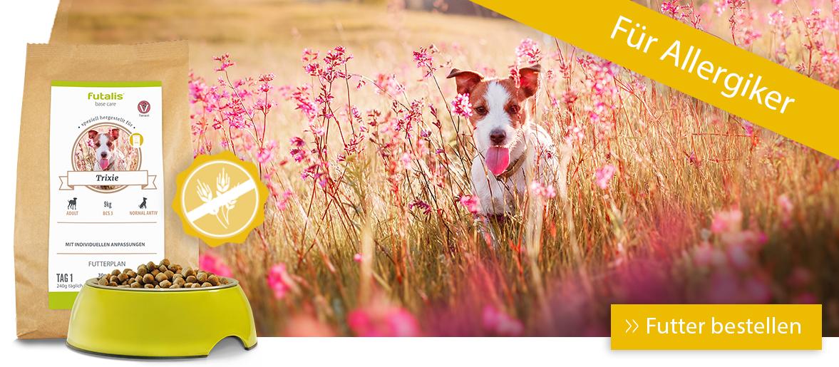 Hypoallergenes Futter für Ihren Hund