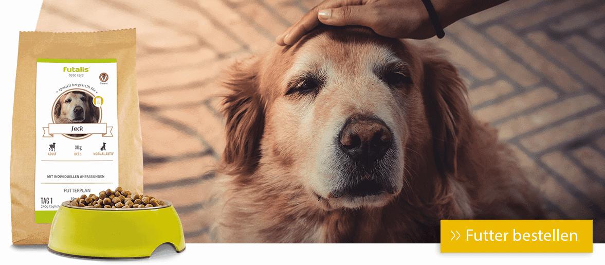 Futter für Ihren Senoirhund