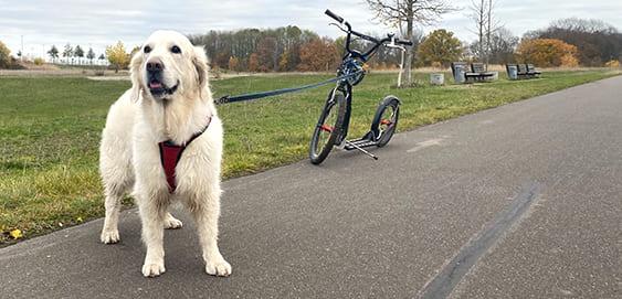 Dogscooter und Hund